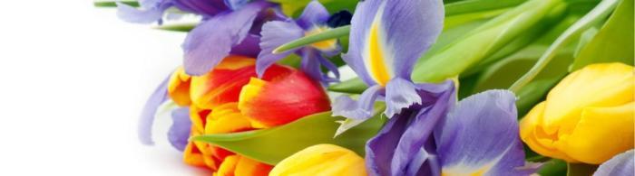 цветы (253)