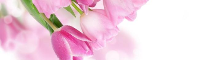 цветы (260)
