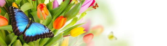 цветы (267)