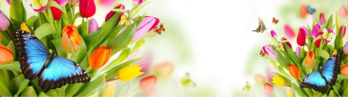 цветы (270)