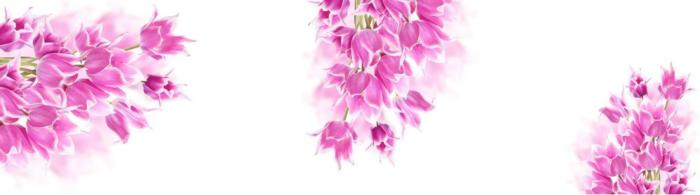цветы (271)