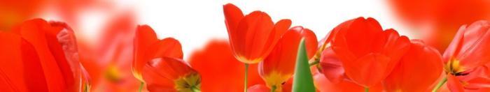 цветы (28)