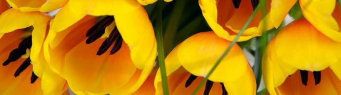 цветы (280)