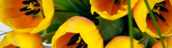 цветы (281)