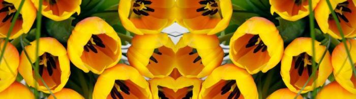 цветы (283)
