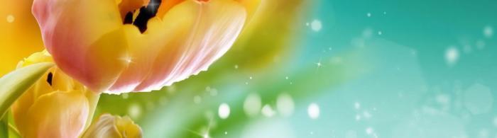 цветы (284)