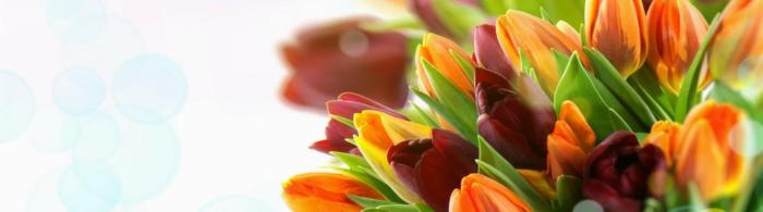 цветы (285)
