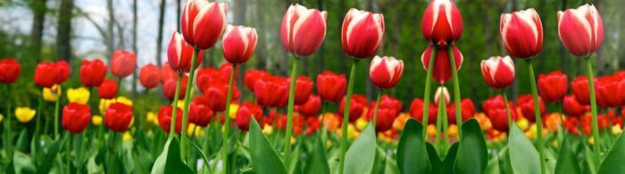цветы (289)