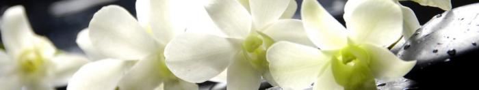 цветы (29)
