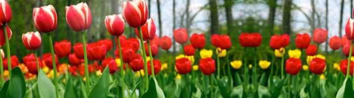 цветы (290)