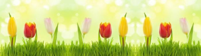 цветы (291)