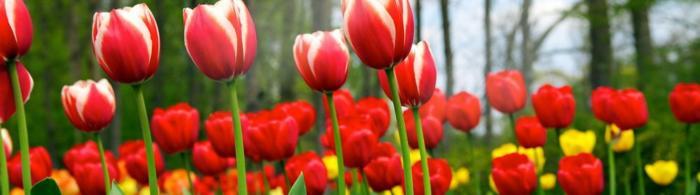 цветы (293)
