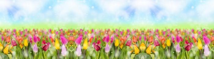 цветы (294)