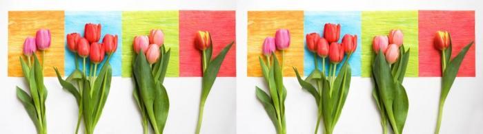 цветы (296)
