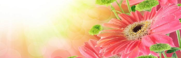 цветы (297)