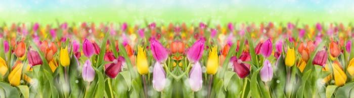 цветы (298)