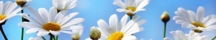 цветы (31)