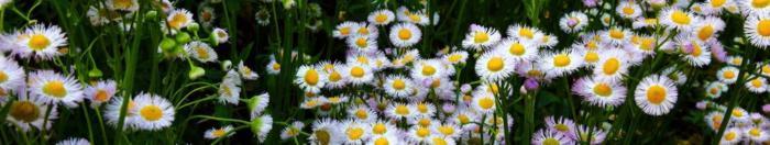 цветы (33)
