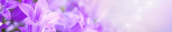 цветы (35)