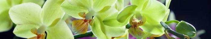 цветы (37)