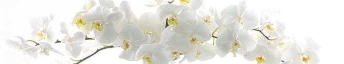 цветы (38)