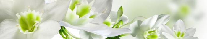 цветы (4)