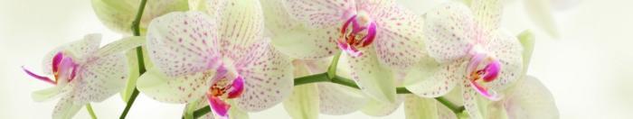 цветы (42)