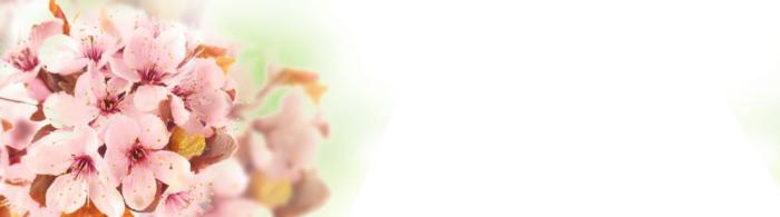цветы (50)
