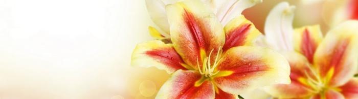 цветы (52)
