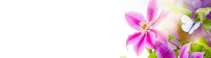 цветы (53)