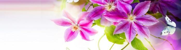 цветы (55)