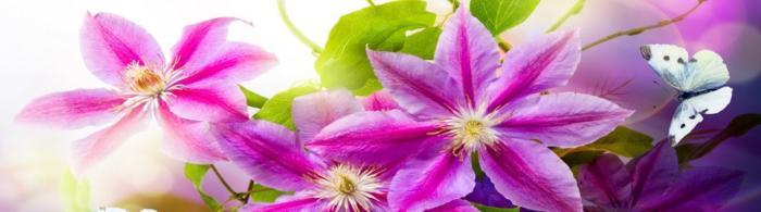 цветы (56)