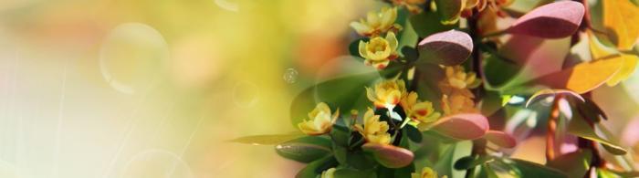 цветы (59)