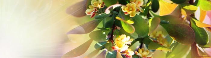 цветы (60)