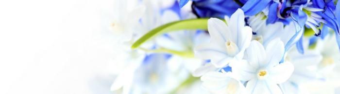 цветы (61)