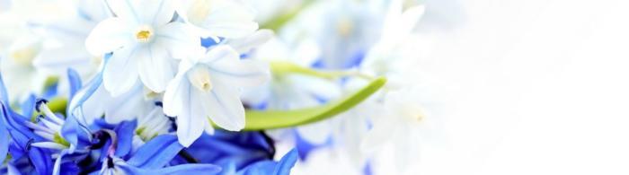 цветы (62)