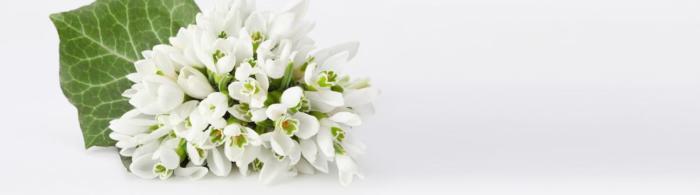 цветы (64)