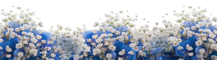 цветы (72)