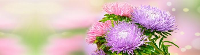 цветы (78)