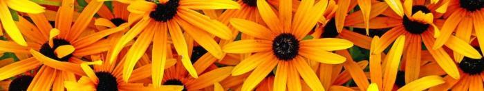 цветы (8)