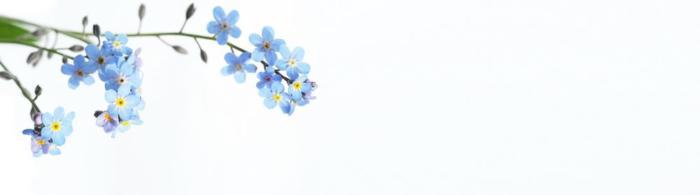 цветы (81)