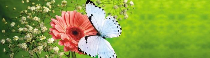 цветы (87)