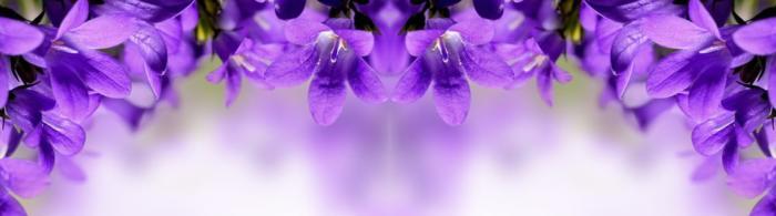цветы (91)