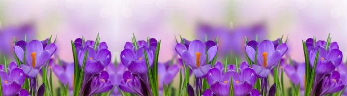 цветы (93)