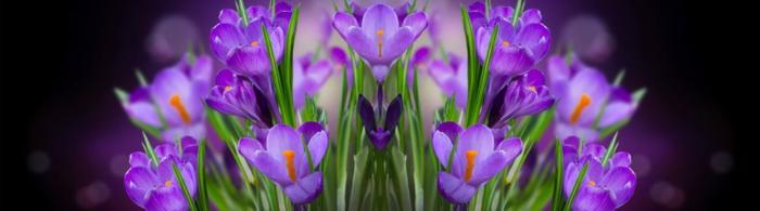 цветы (94)