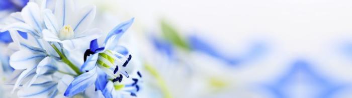 цветы (95)