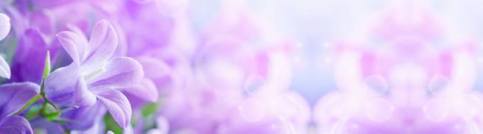 цветы (97)